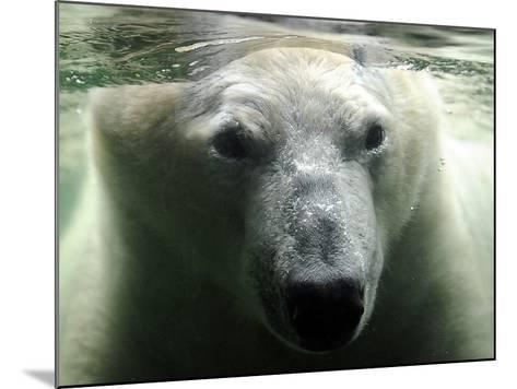 Polar Bear is Pictured under Water at the Zoo in Gelsenkirchen--Mounted Photographic Print