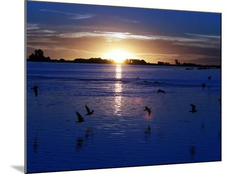 The Sun Sets as Sea Gulls Flies Over Flooded Argentina's Pampas--Mounted Photographic Print
