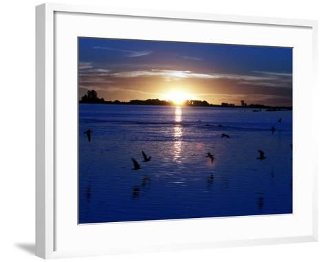 The Sun Sets as Sea Gulls Flies Over Flooded Argentina's Pampas--Framed Art Print