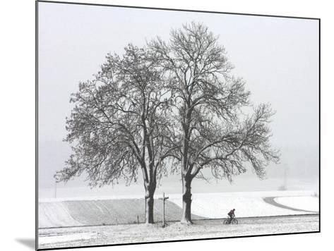 Cyclist Passes a Tree Covered with Snow, Southern Germany--Mounted Photographic Print