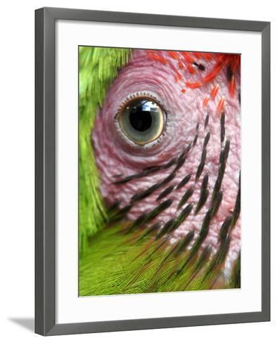 APTOPIX Nicaragua Animal Rescue-Esteban Felix-Framed Art Print