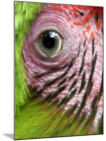 APTOPIX Nicaragua Animal Rescue-Esteban Felix-Mounted Photographic Print