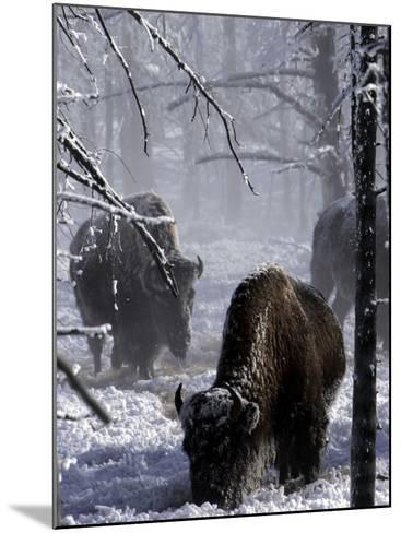 Norton Yellowstone-Laura Rauch-Mounted Photographic Print
