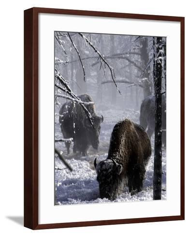 Norton Yellowstone-Laura Rauch-Framed Art Print