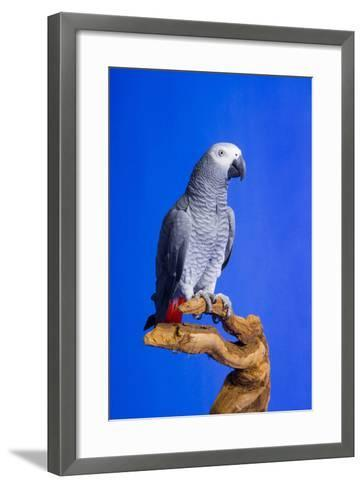 Cockatoo--Framed Art Print