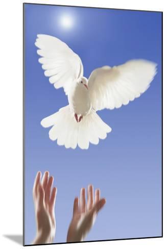 White Dove--Mounted Photographic Print