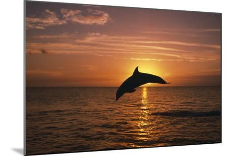 Dolphin--Mounted Photographic Print