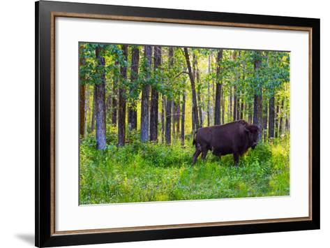 Bison--Framed Art Print