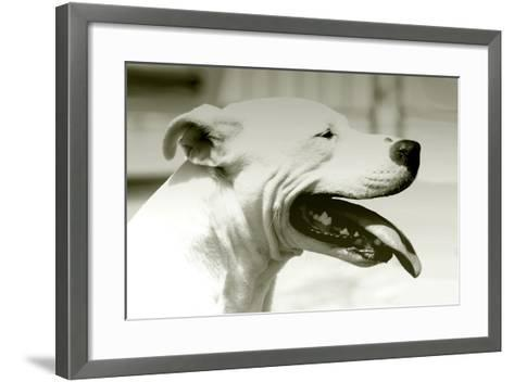Pretty Boy-Karen Williams-Framed Art Print