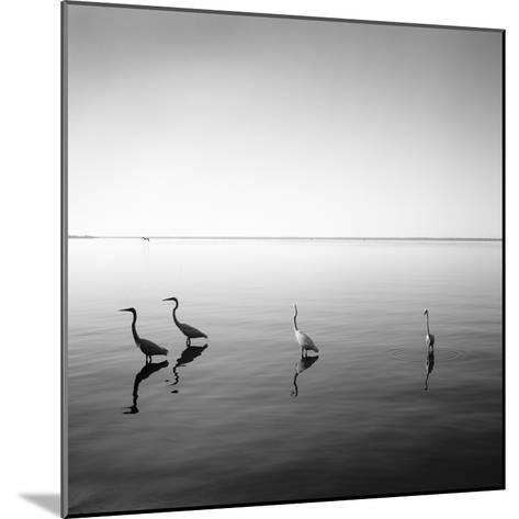 4 Herons-Moises Levy-Mounted Photographic Print