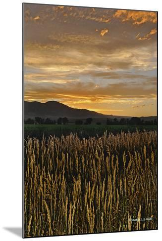 Sunset over Bear Tooth-Amanda Lee Smith-Mounted Photographic Print