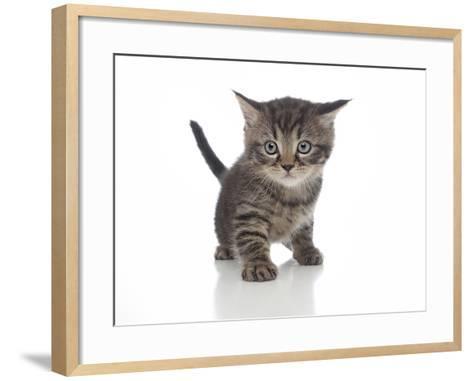 Kittens 013-Andrea Mascitti-Framed Art Print