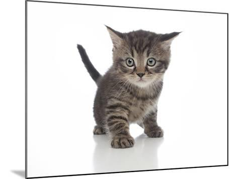 Kittens 013-Andrea Mascitti-Mounted Photographic Print