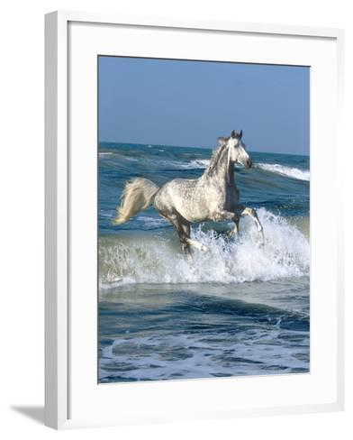 Dapple Sea-Bob Langrish-Framed Art Print