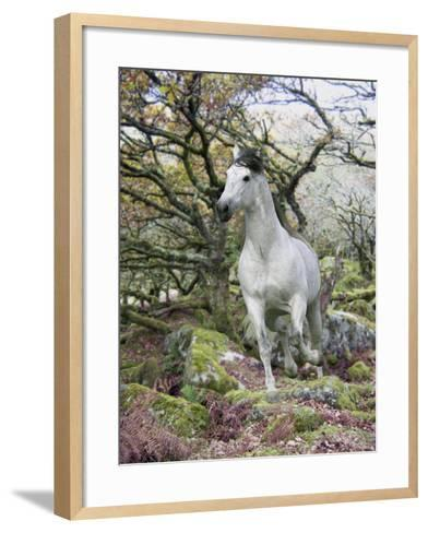 Fantasy Horses 14-Bob Langrish-Framed Art Print