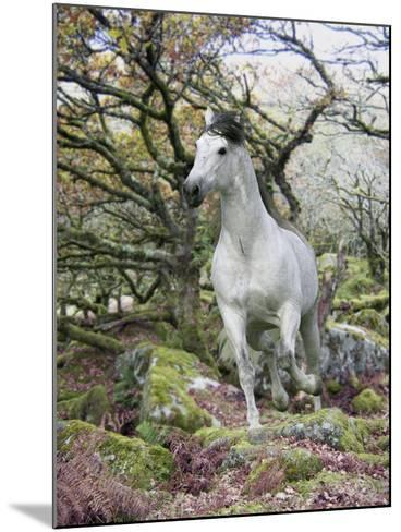 Fantasy Horses 14-Bob Langrish-Mounted Photographic Print