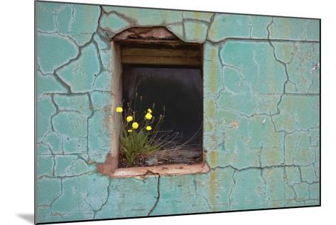 Window 3-Wayne Bradbury-Mounted Photographic Print