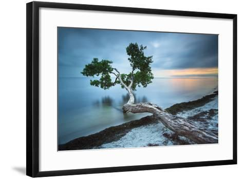Water Tree 10 Color-Moises Levy-Framed Art Print