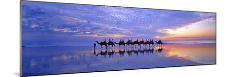 Cable Beach Camels-Wayne Bradbury-Mounted Photographic Print