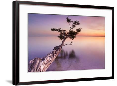 Water Tree XI-Moises Levy-Framed Art Print