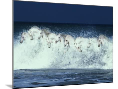 Foam Followers-Bob Langrish-Mounted Photographic Print