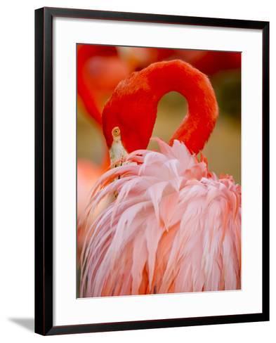 Flamingo 2-Dennis Goodman-Framed Art Print