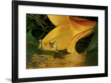 Yellow Lily-Gordon Semmens-Framed Art Print