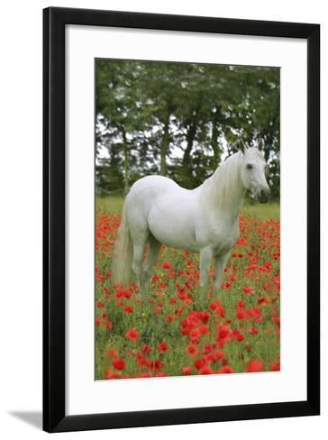 Fantasy Horses 07-Bob Langrish-Framed Art Print