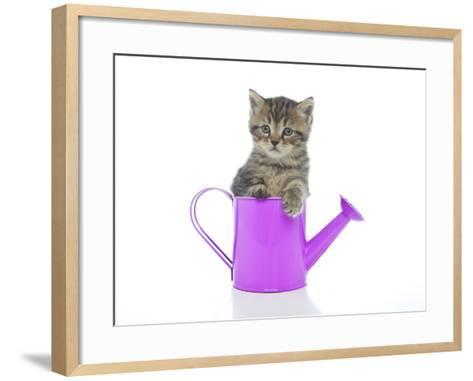 Kittens 035-Andrea Mascitti-Framed Art Print