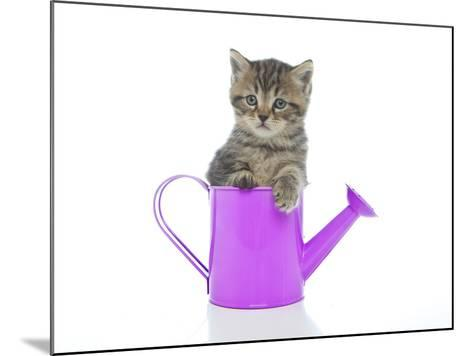 Kittens 035-Andrea Mascitti-Mounted Photographic Print