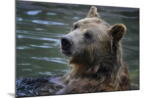 Bear-Gordon Semmens-Mounted Photographic Print