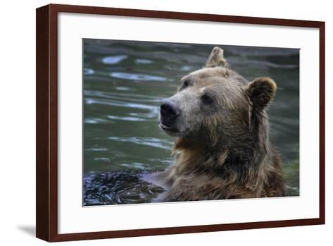 Bear-Gordon Semmens-Framed Art Print