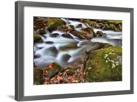 Rocks and Leaves-Bob Rouse-Framed Art Print