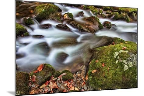 Rocks and Leaves-Bob Rouse-Mounted Photographic Print