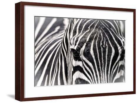 Zebra-Gordon Semmens-Framed Art Print