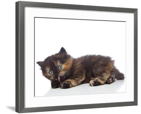 Kittens 030-Andrea Mascitti-Framed Art Print