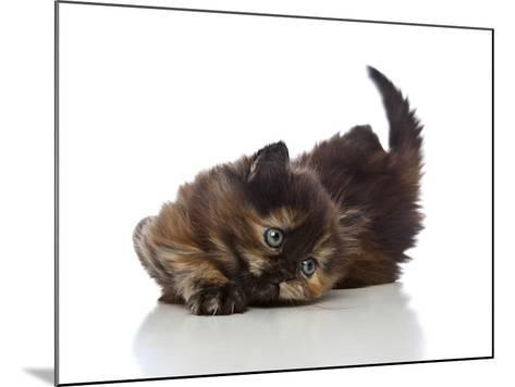 Kittens 032-Andrea Mascitti-Mounted Photographic Print