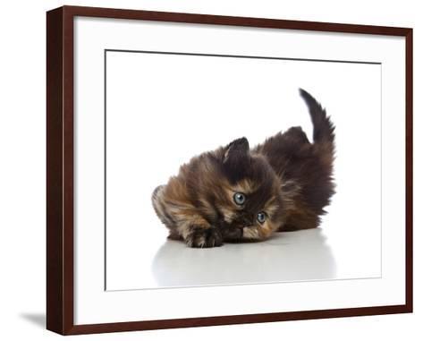 Kittens 032-Andrea Mascitti-Framed Art Print