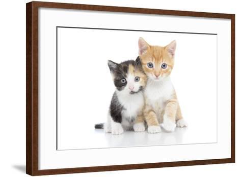 Kittens 001-Andrea Mascitti-Framed Art Print