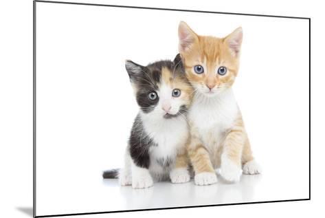 Kittens 001-Andrea Mascitti-Mounted Photographic Print
