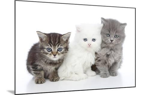 Kittens 006-Andrea Mascitti-Mounted Photographic Print
