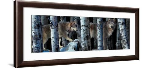 Moon Shadows 2-Gordon Semmens-Framed Art Print