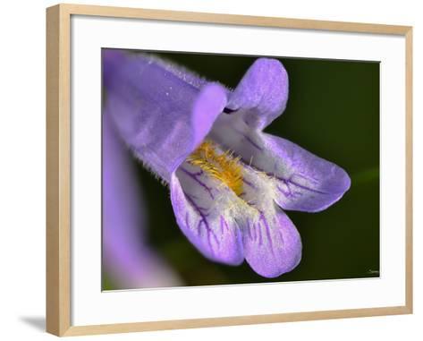 Flower-Gordon Semmens-Framed Art Print