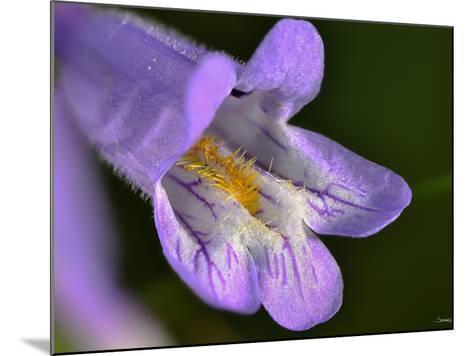 Flower-Gordon Semmens-Mounted Photographic Print