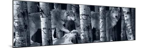 Silver Tone Moon Shadows 2-Gordon Semmens-Mounted Photographic Print
