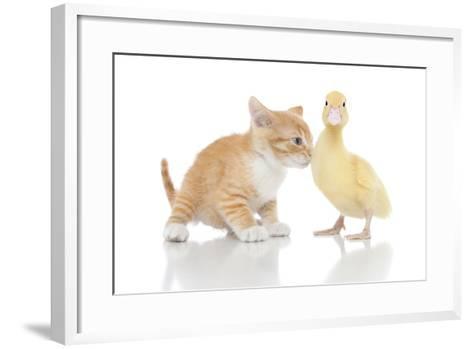 Kittens 017-Andrea Mascitti-Framed Art Print