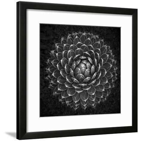 Agave Victoria-Moises Levy-Framed Art Print