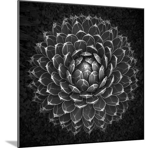 Agave Victoria-Moises Levy-Mounted Photographic Print