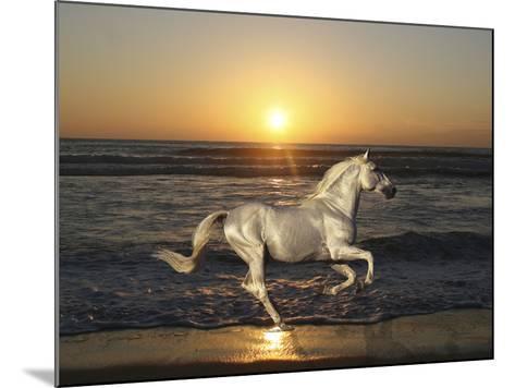 Sunset-Bob Langrish-Mounted Photographic Print