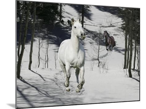 Snow Chase-Bob Langrish-Mounted Photographic Print